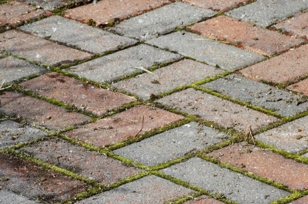 Brick Paver Maintenance image
